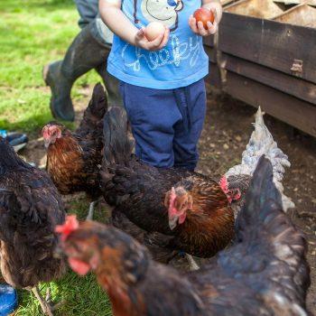 Shilvington Escapes - The farm eggs