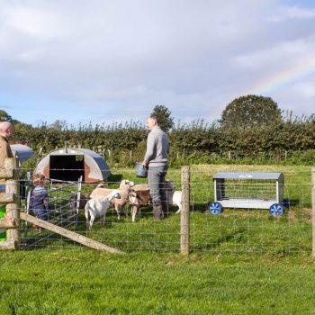 Shilvington-farm - Farmer Barty