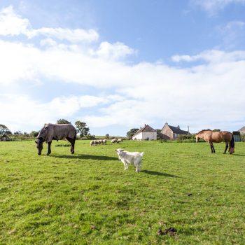 Shilvington-farm